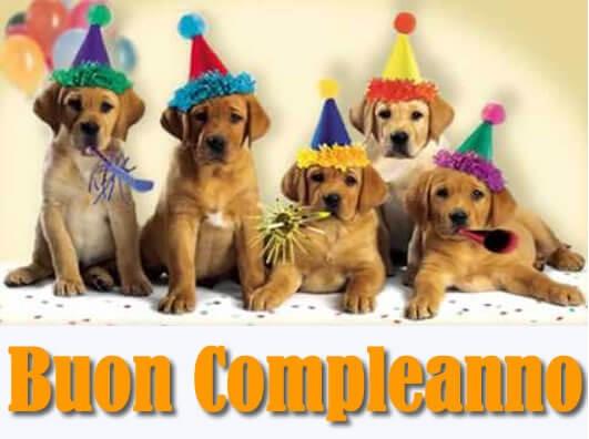 Buon compleanno cuccioli