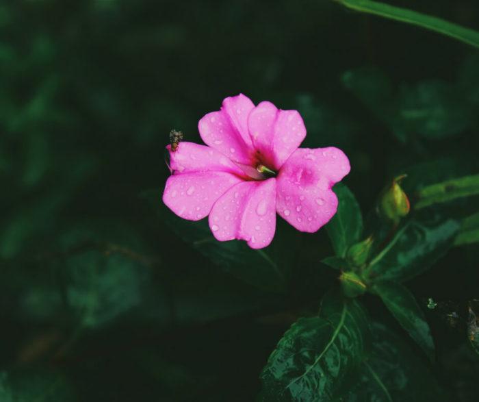Immagini di fiori