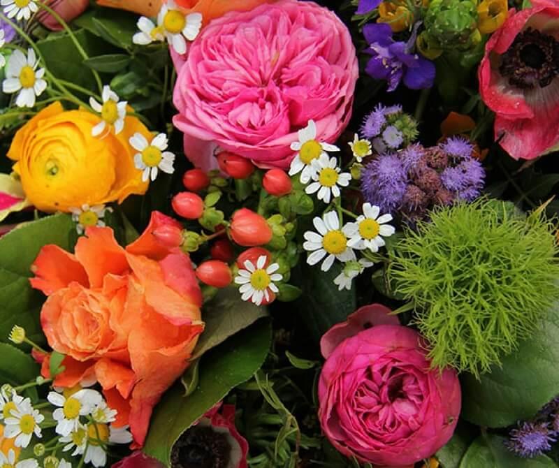 immagini di fiori bellissimi