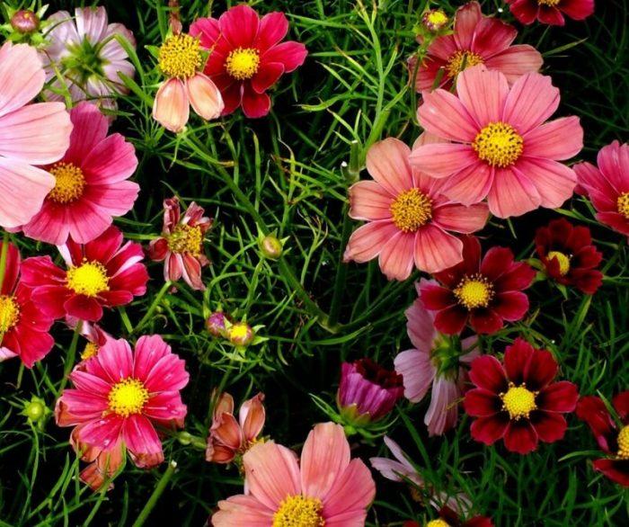 foto di fiori bellissimi
