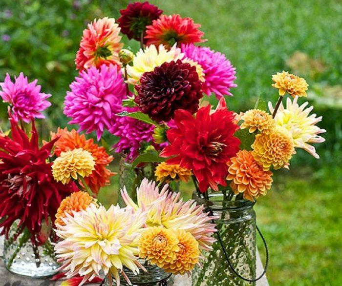 immagine di fiori