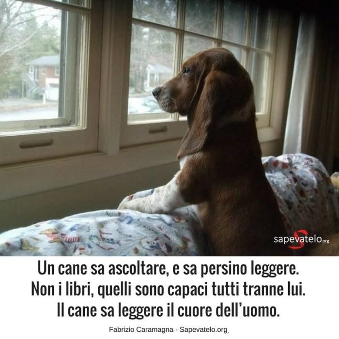 frasi sui cani belle