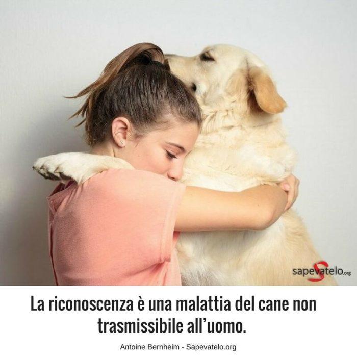 Le Più Belle Frasi Sui Cani I Migliori Amici Delluomo