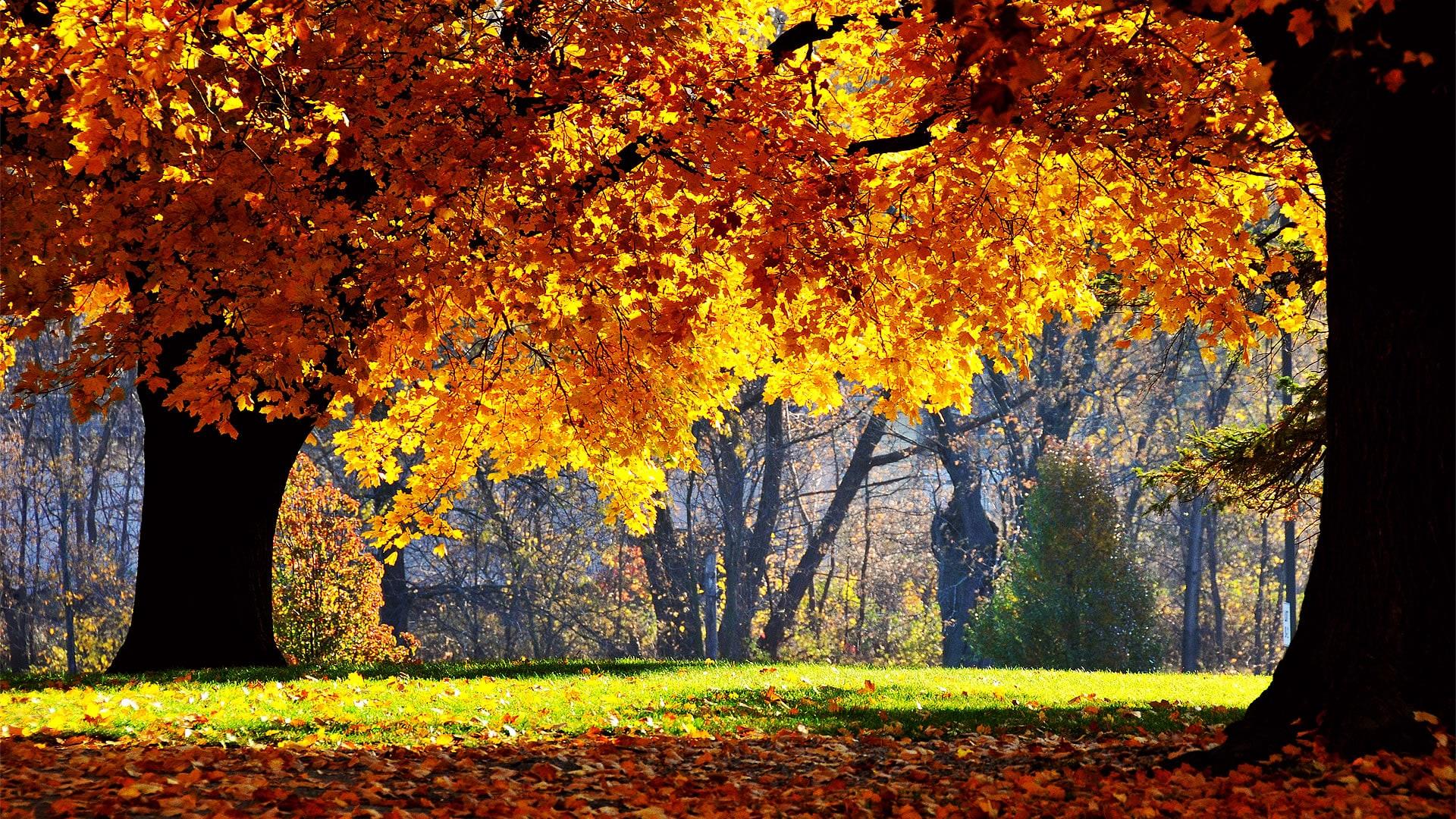 Sfondi desktop in hd gratis da scaricare for Immagini autunno hd